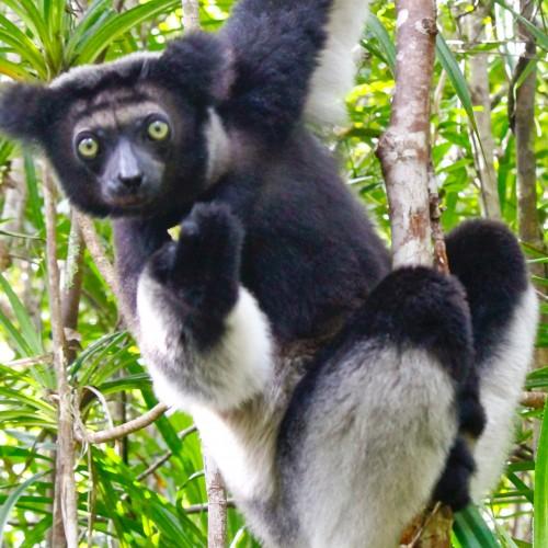 Progetto Madagascar