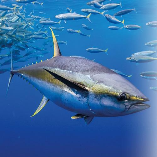 Il consumo di prodotti ittici