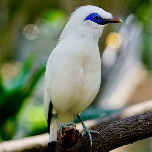 La crisi degli uccelli canori